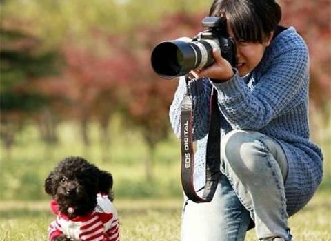 宠物摄影师稀少